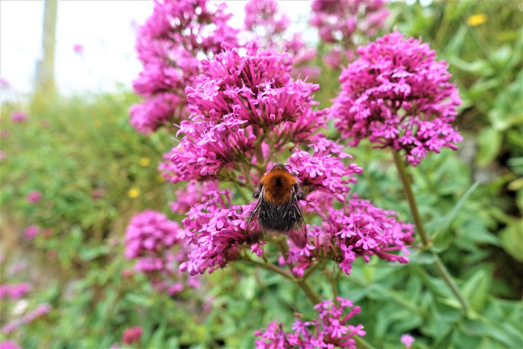 Busy bee by johnsutton