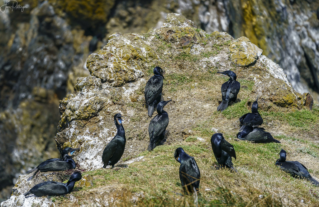 Cormorant Breeding and Nesting Area by jgpittenger