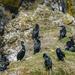 Cormorant Breeding and Nesting Area