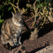 Cat among the rose bushes...