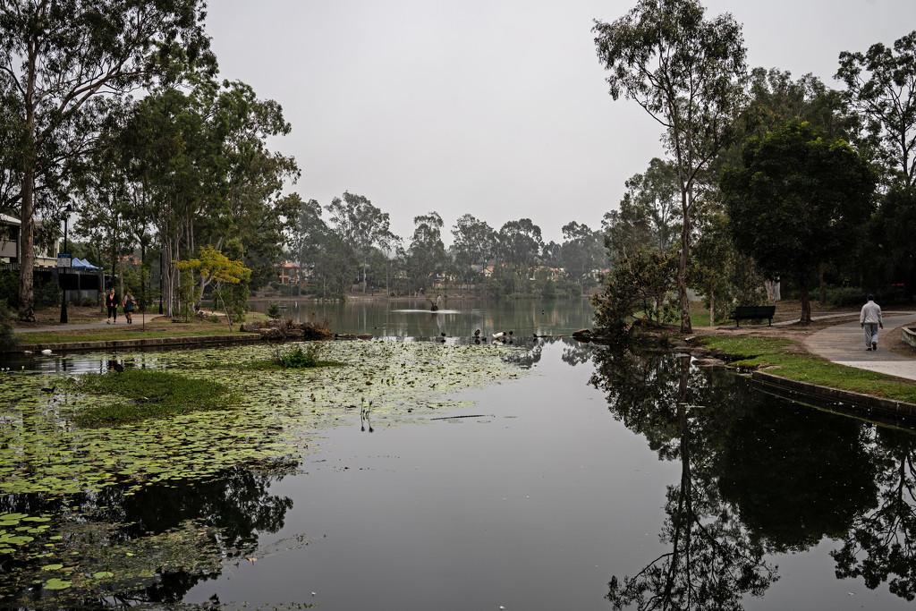 Foggy lake  by sugarmuser