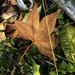 No.18 Leaf