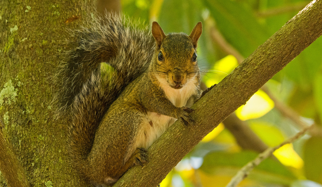 Mother Squirrel, Thinking I Won't See Her If She Doesn't Move! by rickster549