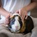 Foster Pet
