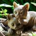 Planter cats