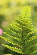 18th Jun 2019 - 30 Days Wild, day 18 ; Leaf