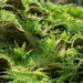ferns and mossy boulders