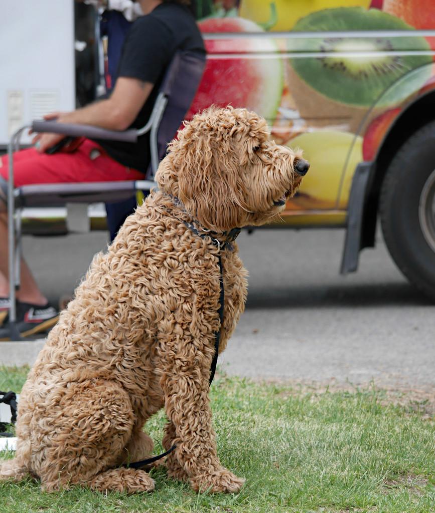 Dog by gq