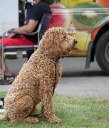 16th Jun 2019 - Dog