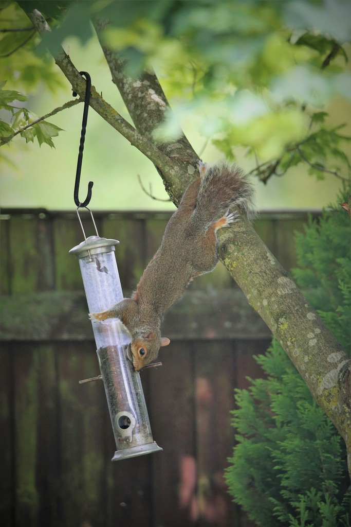 Tree Rat by phil_sandford
