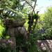 26th May Natural Sculpture Dorset