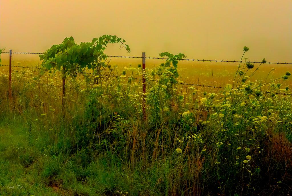Foggy morning ride by samae