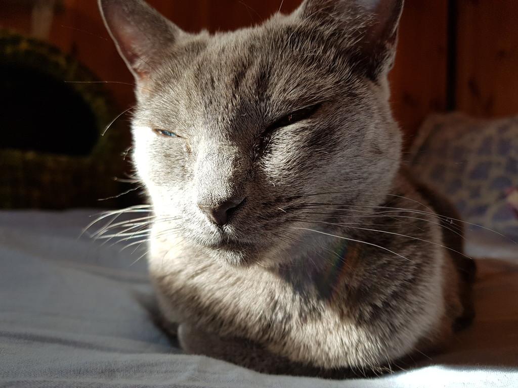 Sunny spot by katriak