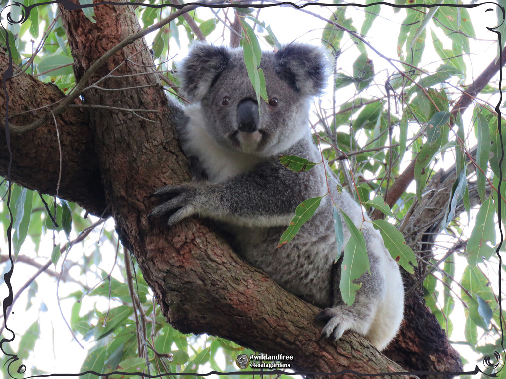 do I look good in green? by koalagardens