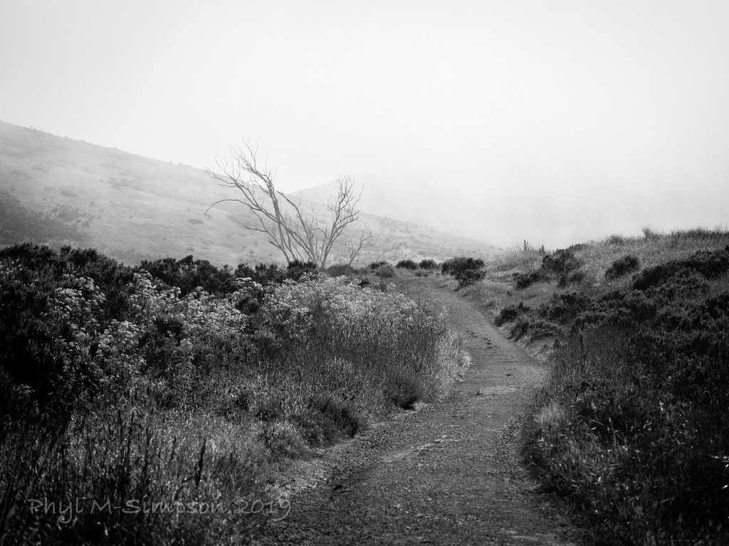 And The Trail Keeps Winding by elatedpixie