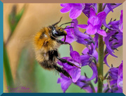 19th Jun 2019 - Collecting Pollen