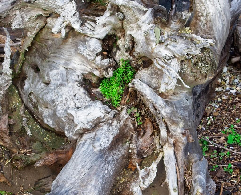 Nursery log by kiwinanna