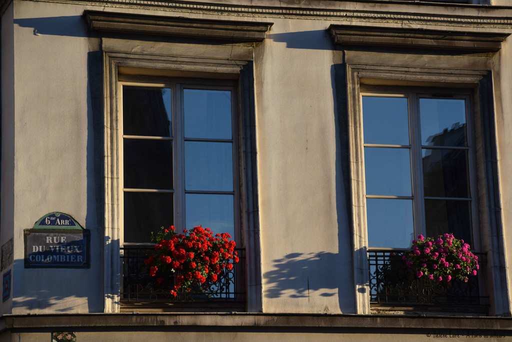 flowery window by parisouailleurs
