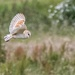 Barn Owl 2 by pamknowler