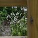 foxglove framed