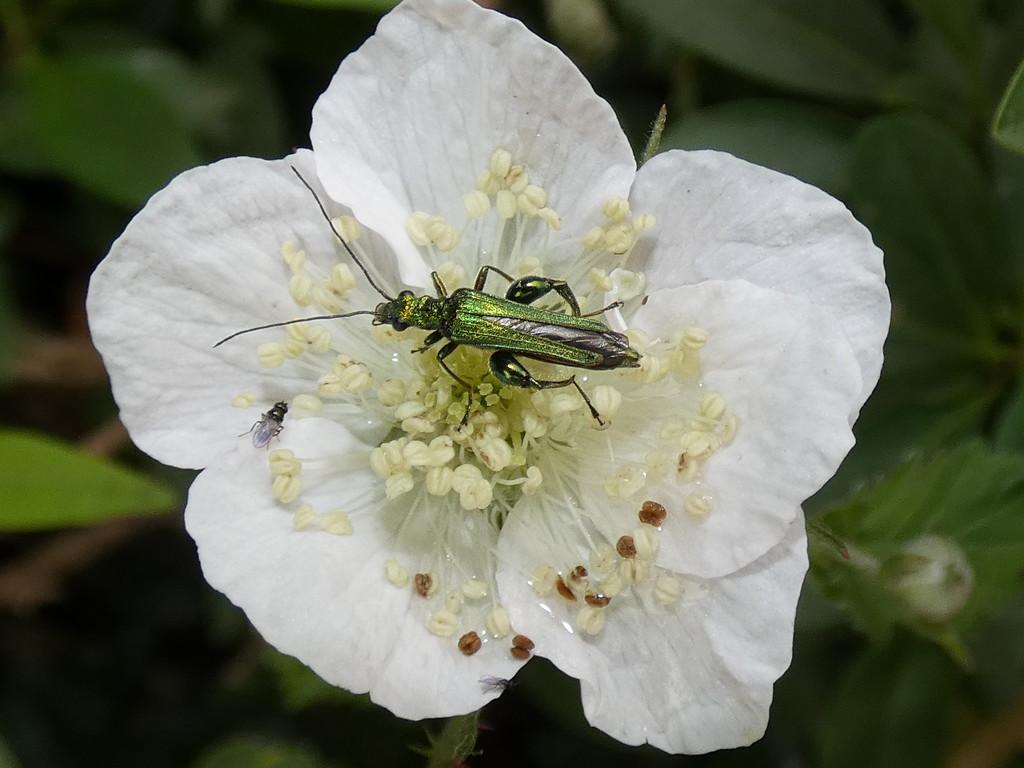 Bug tea time by julienne1
