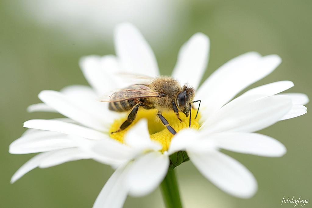 The Honey Maker! by fayefaye