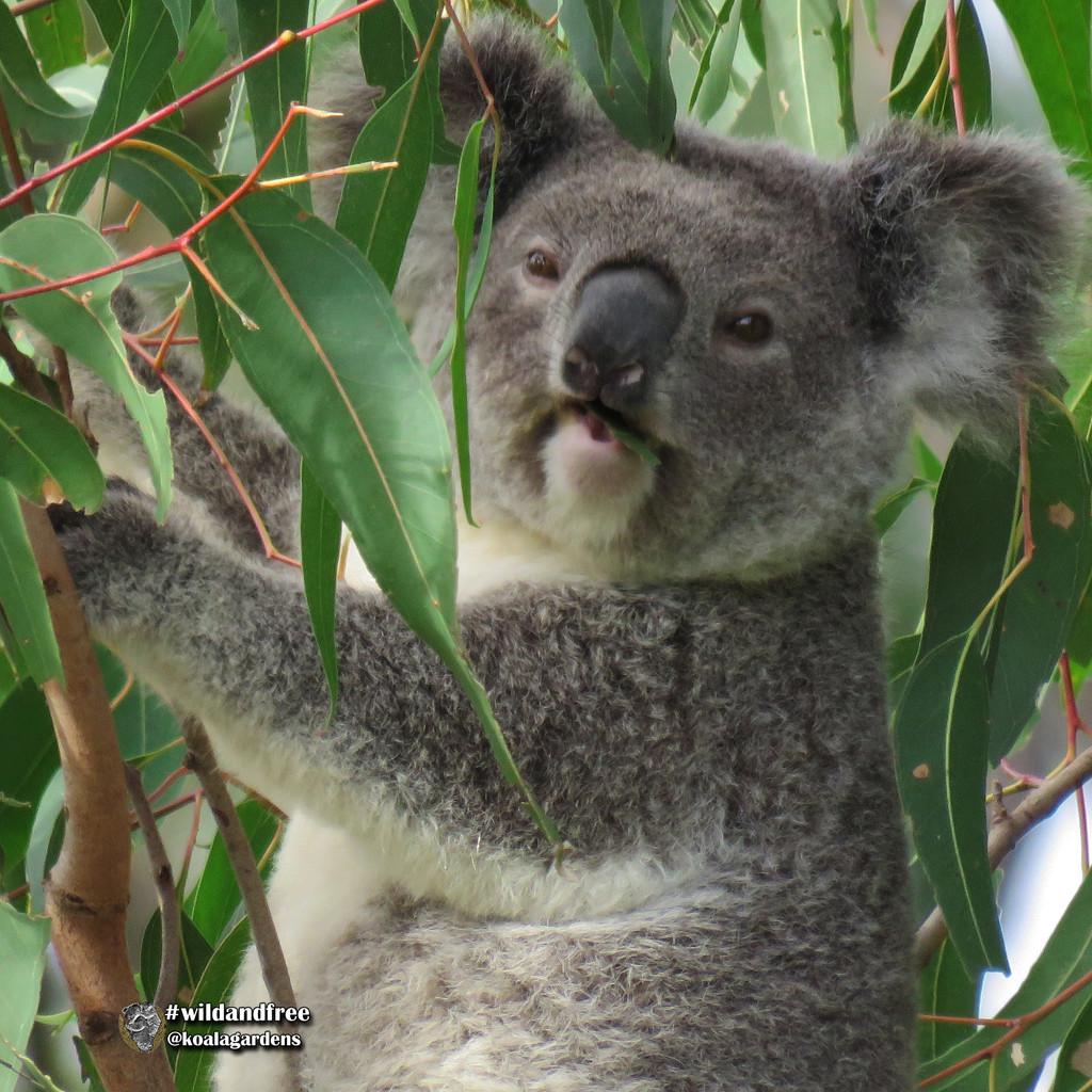 happy snacking by koalagardens