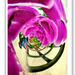 Foxglove twirl