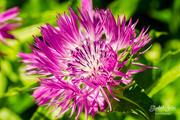 20th Jun 2019 - Pink flower