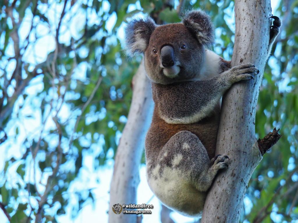 good morning Jordan by koalagardens