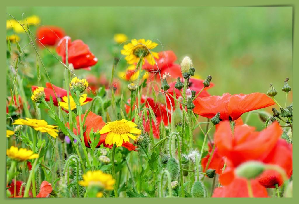 Roadside Flowers by carolmw