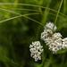bug on white flower