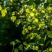 June Words - Leaves