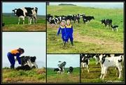 22nd Jun 2019 - Farmer Girls..