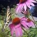 Pollinators Day