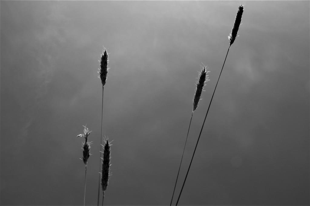 Cut Grass by 30pics4jackiesdiamond