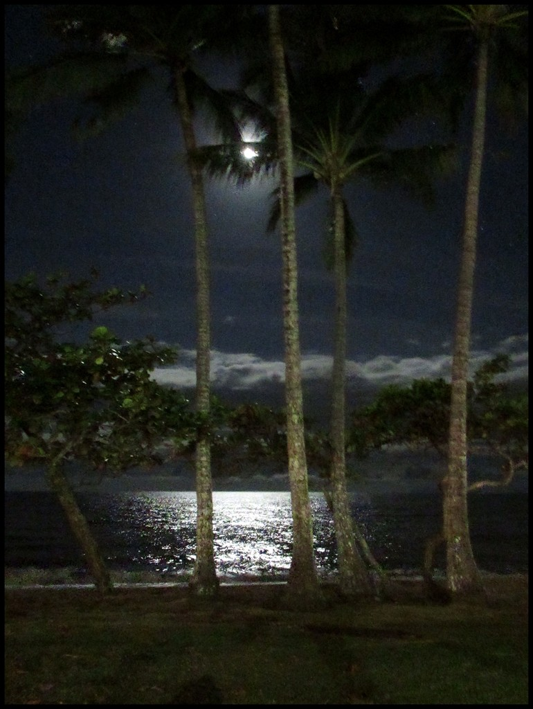 Moonlight over Palm Cove by robz