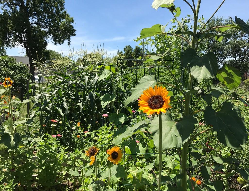Community Garden by allie912