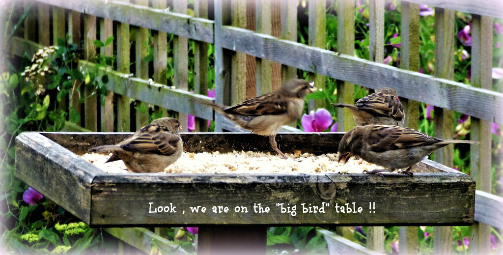 Look , we are on the big bird table ! by beryl