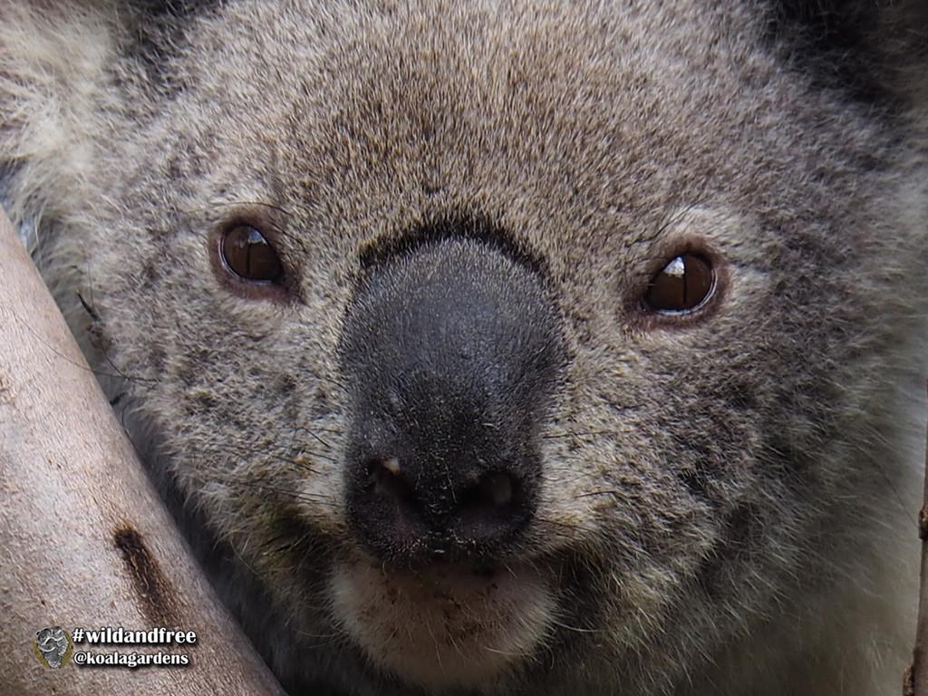 the face of a princess by koalagardens