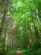 23rd Jun 2019 - Through the Woodland