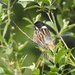 Mr Reed Bunting