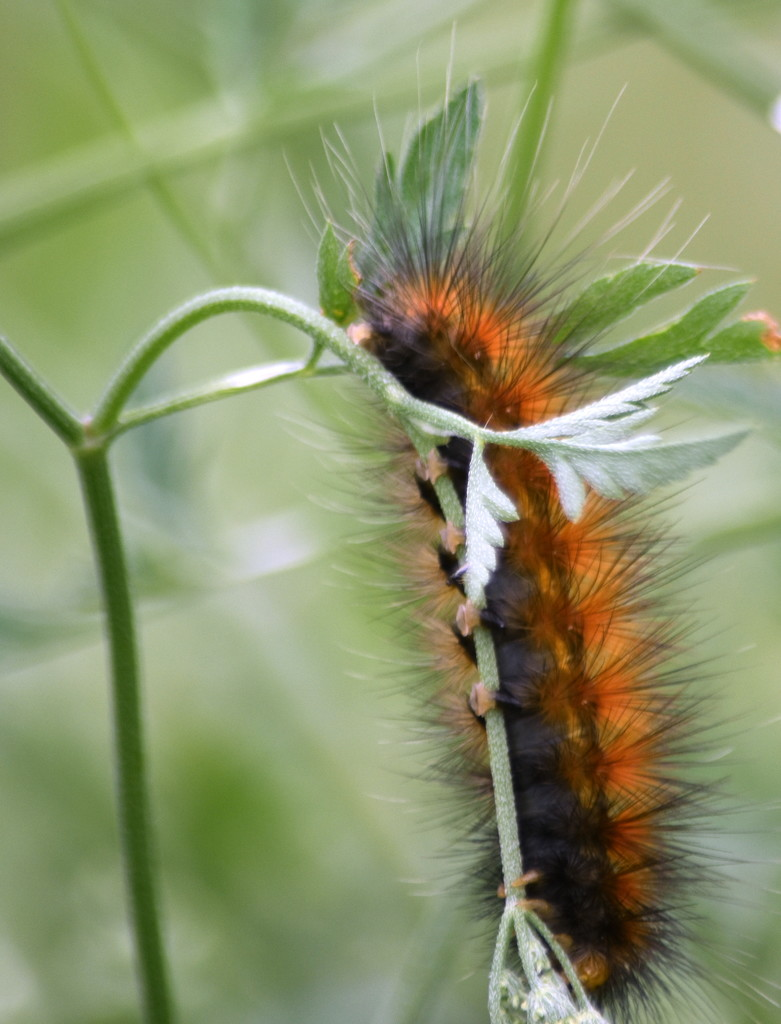 The Very Hungry Caterpillar by genealogygenie