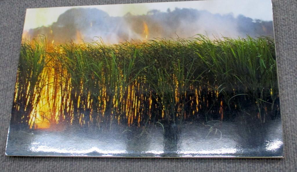 Burning Sugarcane  near Nambour by 777margo