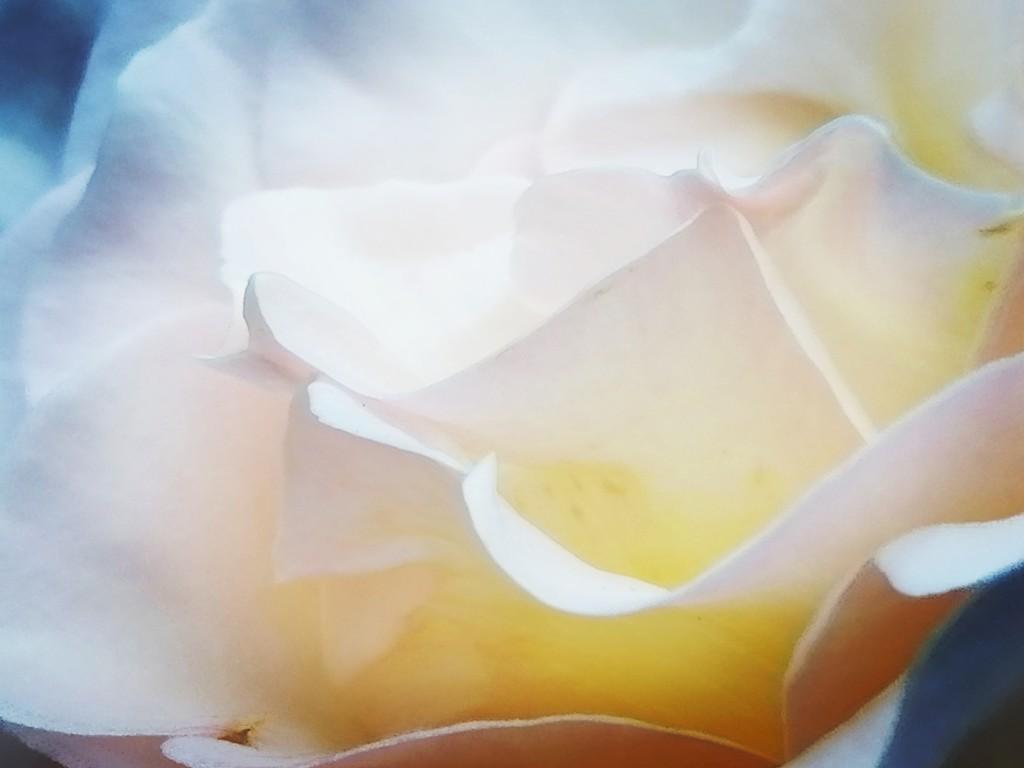 Chandos by flowerfairyann