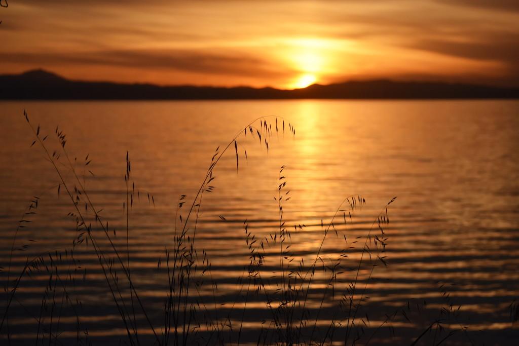 Sunrise at San Francisco Bay by genealogygenie