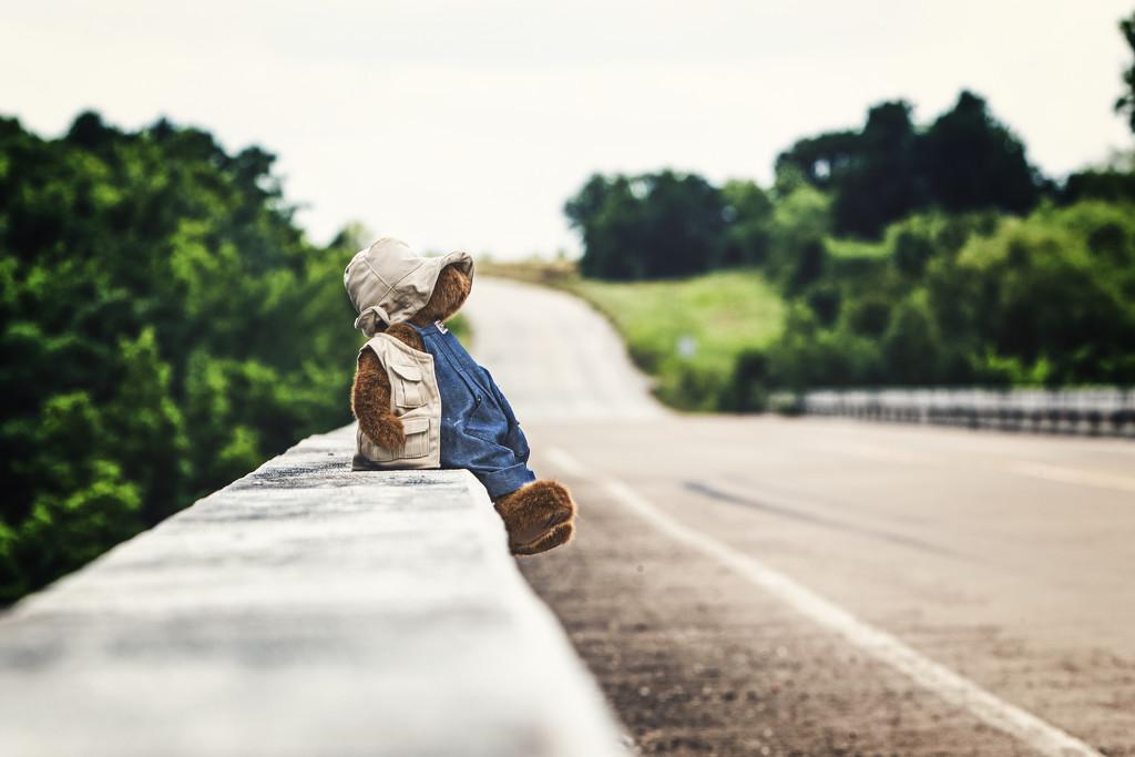 Traveling Teddy by swwoman