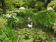 25th Jun 2019 -  Gooderstone Water Gardens