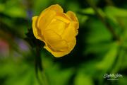 25th Jun 2019 - Yellow flower