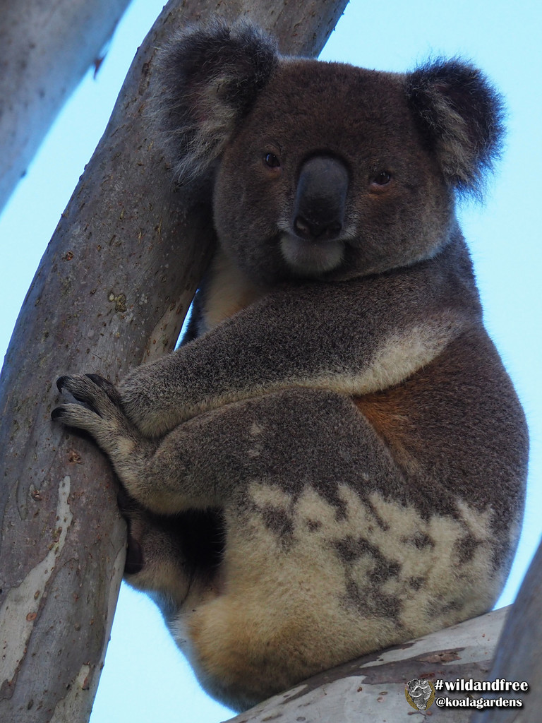 this tree was made for me by koalagardens